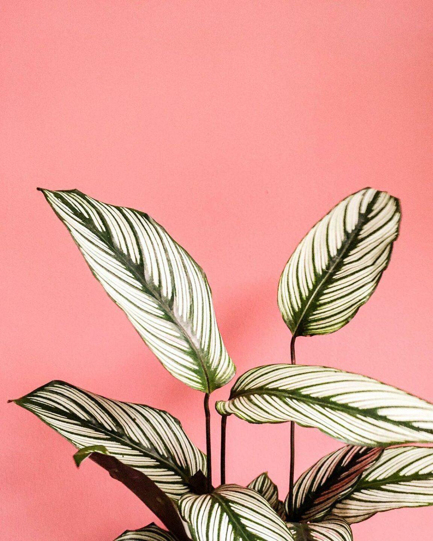 Plantwerp